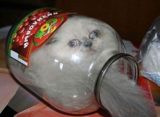 cats 11 catsintwarer (2)